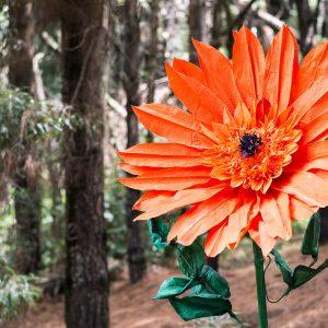flores gigantes gerbera
