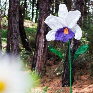 flores gigantes orquídea