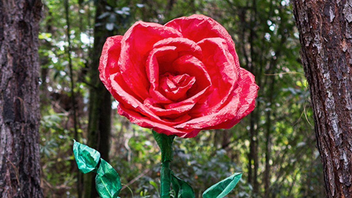 rosa roja flores gigantes