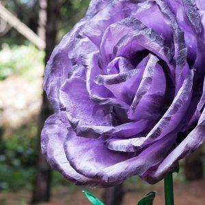 rosa violetaa flores gigantes