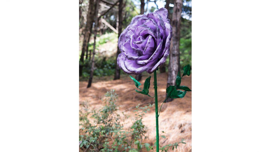 flores gigantes rosa violeta colombia